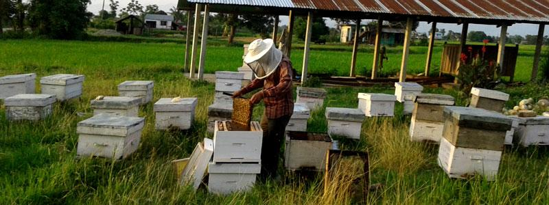 Bee keeping in Chitwan Jungle Safari tour
