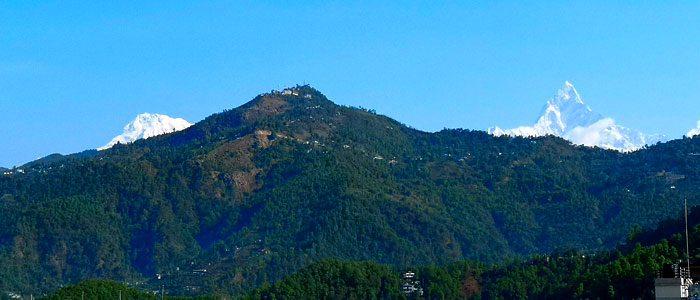 Forest Camp of Mardi Himal Trekking